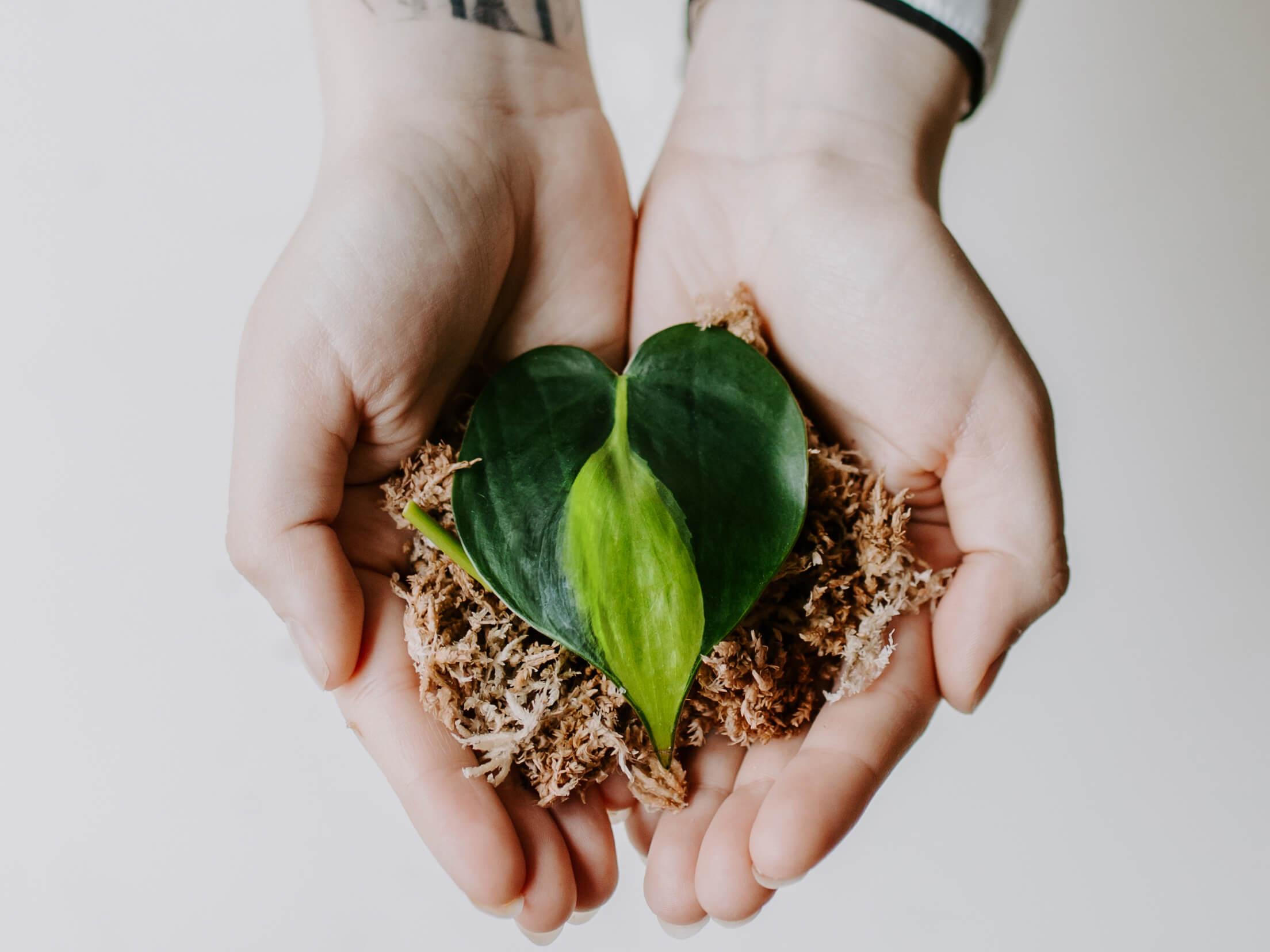 Jak ukorzeniać rośliny w mchu?