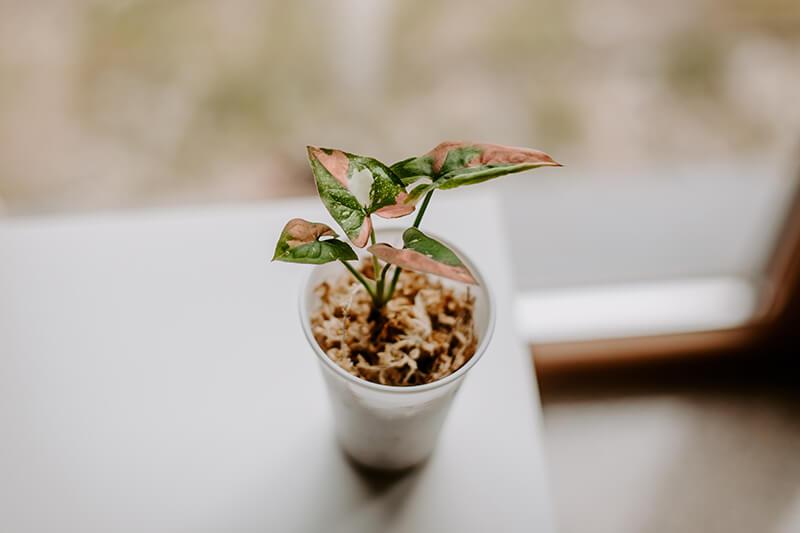 Jak-wyhodować-roślinę-z-ogryzka-5