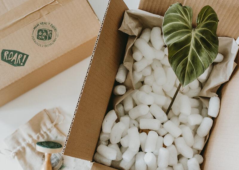 Pakowanie roslin do wysyłki