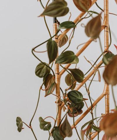 Drabinka do roślin pnących busz.busz 03
